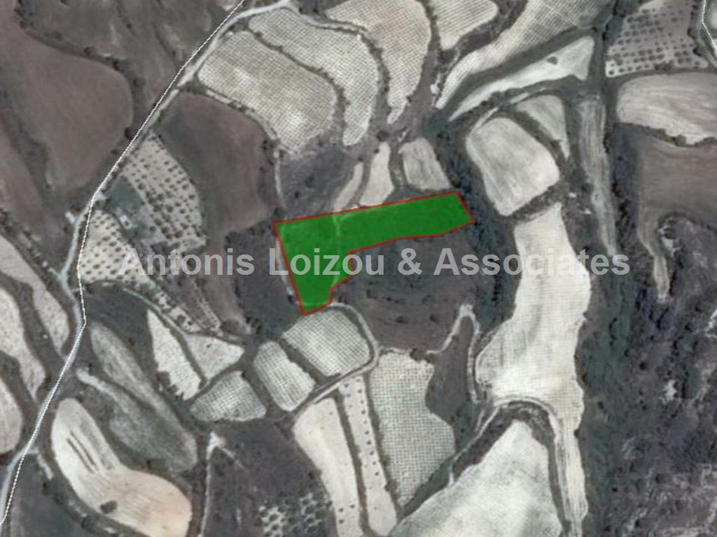 Field in Paphos (Kallepia) for sale